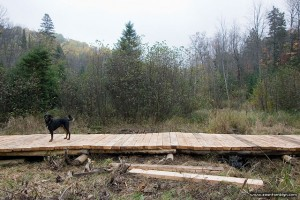 Beaver Meadow boardwalk construction, Arrowhead Provincial Park, Ontario