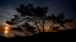 Pine trees silhouetted by the rising moon, Big McCoy Island, Georgian Bay