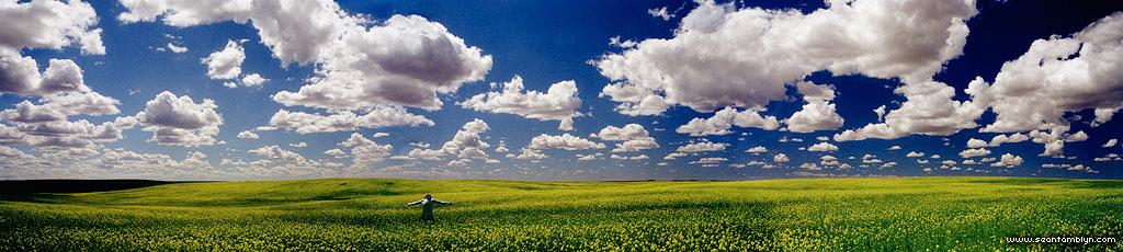 Panorama of woman in endless canola field, Saskatchewan
