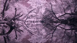 Snug Harbour infrared reflections, Snug Harbour, Toronto Islands