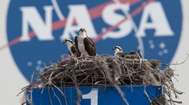 Osprey nest in front of VAB, Kennedy Space Centre