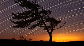 Windswept pine tree and star trails, Parry Sound, Georgian Bay